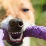 10 животных, которые кусают сильнее всех