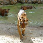 Опасные животные Таиланда