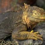 Рептилии и температура их тела