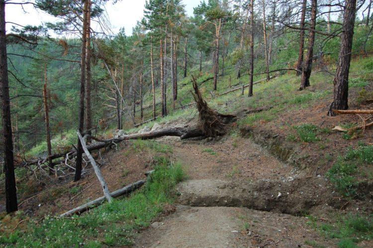 В реликтовых лесостепях Байкала