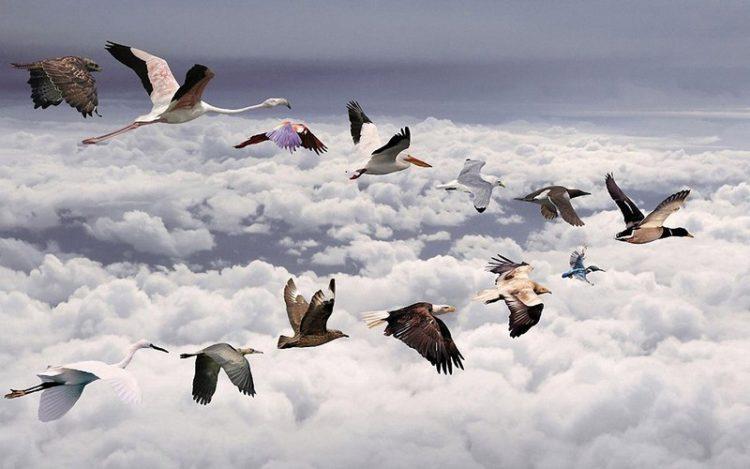 Пролетные птицы