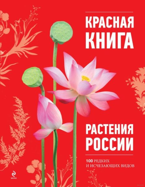 Растения Красной Книги России – описание и фото
