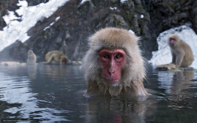 Животные Японии