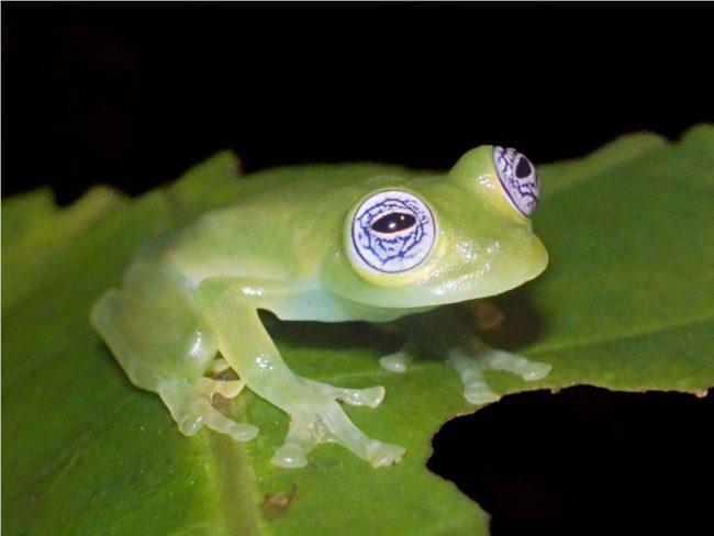 Рассказ сравнение лягушки и жабы